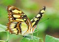 Vlinders-insecten