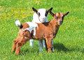 Boerderij-dieren