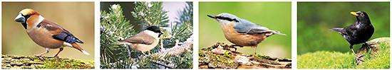 Ansichtkaarten bosvogels, bosvogel kaarten