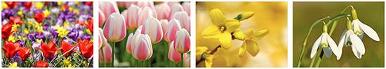 Bloemenkaarten, kaarten met bloemen