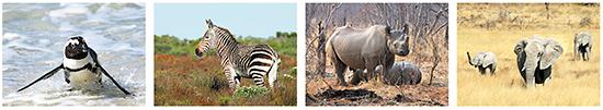 ansichtkaarten dieren in Afrika, Afrikaanse dieren, wilde dieren