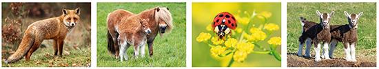 dieren kaarten, ansichtkaart dieren, kaarten dieren