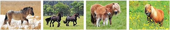 Paarden kaarten