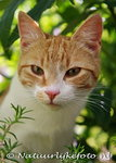 Ansichtkaart Poes, cat postcard, Postkarte Katze