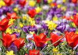 ansichtkaart bloemenperk kaart  - postcard various flowers - blumen Postkarten