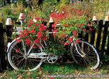 Ansichtkaart fiets - postkaart fiets - typisch Nederland