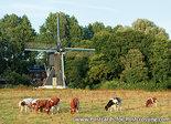 Ansichtkaart van deSchoterveense molen in Haarlem