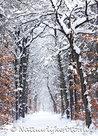 goedkope kerstkaarten kopen, ansichtkaart Mensinge Bos, winter postcard, Postkarte Winterlandschaft