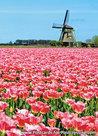 ansichtkaart Poldermolen P in Oudesluis, mill postcard, Mühle Postkarte