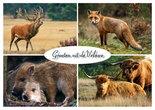 Ansichtkaart dieren op de Veluwe, animals on the Veluwe,Tiere auf der Veluwe