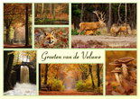 Ansichtkaart herfst op de Veluwe, Postcard autumn, Postkarte Herbst Veluwe