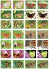 Vlinder-stickervel-(SV010)