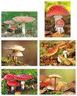 Paddestoelen kaartenset, Mushroompostcard set, Postkarten set Pilze