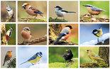 kaartenset bos vogels - Postcard set forest birds - Postkarten Set Waldvögel
