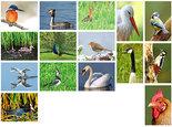 kaartenset-vogels-(set-nr.-24)