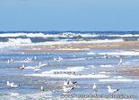 ansichtkaart strand en zee kaart - postcard beach and sea - postkarte Strand und meer