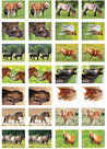 Paarden stickers - stickervellen met paarden