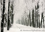 ansichtkaart winter laantje, postcard winter lane, Postkarte winter lane, Veluwe
