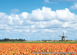 Ansichtkaart molen met tulpen