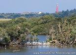Ansichtkaart met vuurtoren Schiermonnikoog, postcard Lighthouse Schiermonnikoog, postkarte Leuchtturm Schiermonnikoog