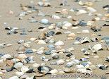 Ansichtkaart schelpen op strand, postcard seashells on the beach, Postkarte Muscheln am Strand