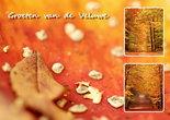 Herfstkaarten, ansichtkaart Veluwe, Autumn postcard, Herbst Postkarte