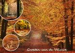 Herfstkaarten, Ansichtkaart 007 van de Veluwe