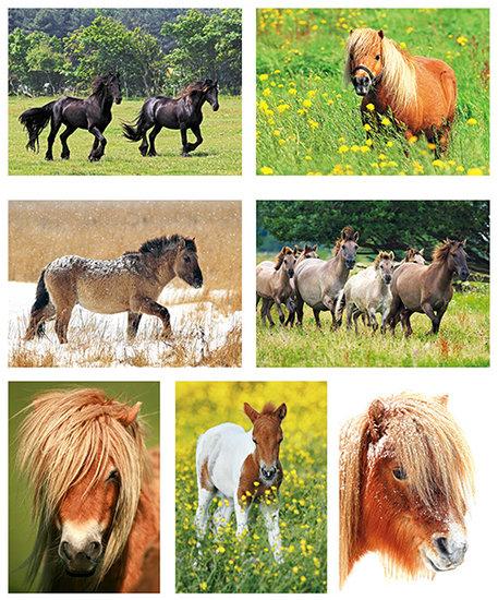 kaartenset paarden en ponys