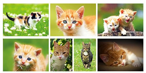 kaartenset katten en poezen