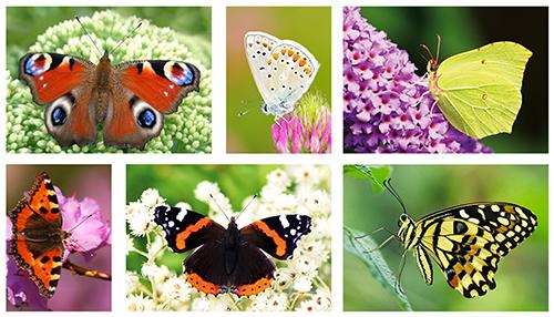 kaartenset van vlinders