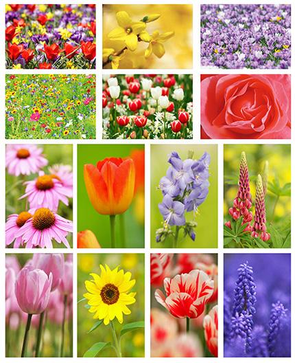 kaartenset bloemen