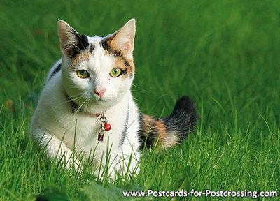 ansichtkaart kat met kattenbelletje