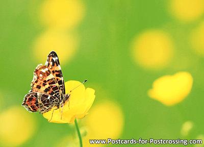 Vlinder kaarten, ansichtkaart vlinder Landkaartje - postcardMap butterfly - postkarte Schmetterling Landkärtchen