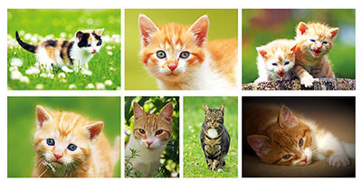 Katten kaarten set - Cat Postcard set - Katzen Postkarten Set