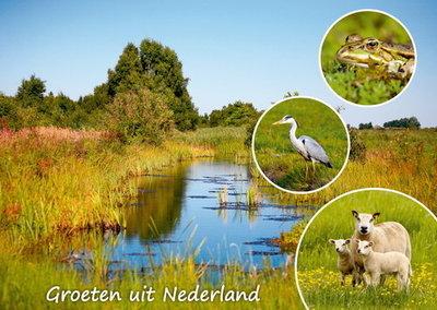 Ansichtkaart Groeten uit Nederland 005