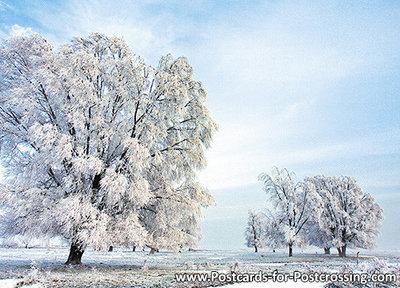 ansichtkaart winterslandschap in Lauwersmeergebied, postcard winterslandscape, Postkarte Winterlandschaft