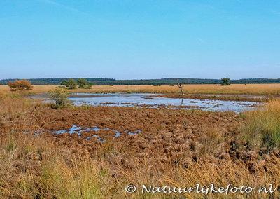 Landschap op de Veluwe, Landscape on the Veluwe, Landschaft auf der Veluwe