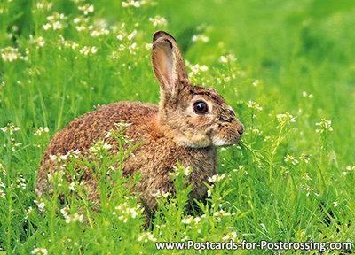 ansichtkaart konijn