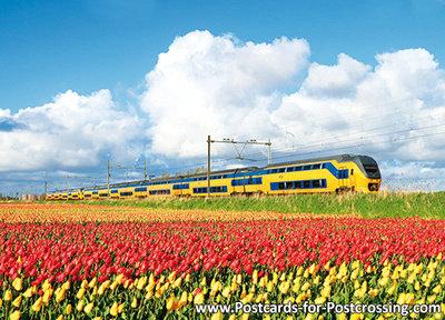 train ansichtkaart NS trein met tulpenveld, train postcard NS train, Zug Postkarte NS Zug