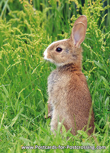 kaart konijntje, wild animal postcard European rabbit, Tierpostkarte Wildkaninchen