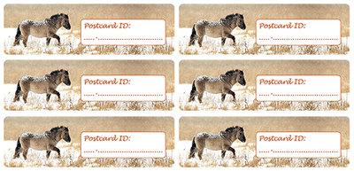 Postcard ID stickers - 6x Konikpaard