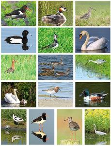 vogel kaartenset  -  bird postcard set - Vögel Postkarten Set