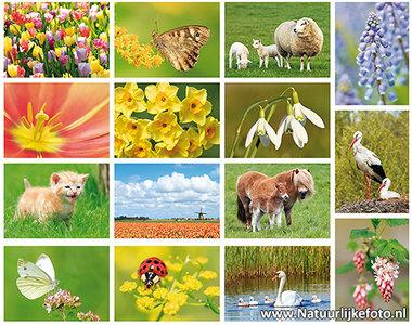 ansichtkaarten set lente - 15 kaarten in een set