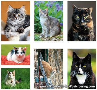 Postkaarten / ansichtkaarten set katten