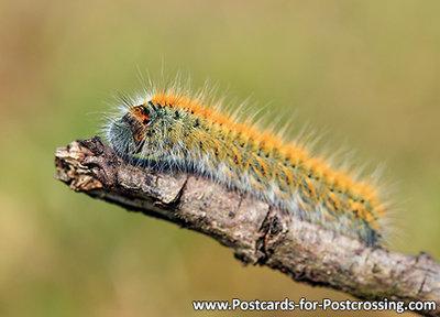 Ansichtkaart rups kaart, Caterpillar postcard, Postkarte Raupe