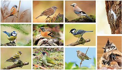 ansichtkaarten vogels / kaarten set vogels