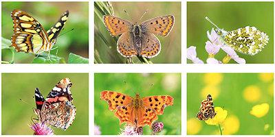 Vlinder kaarten set - Schmetterlinge Postkarten Set