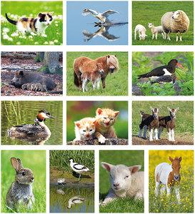 Postkaarten / kaarten set dieren - Tierpostkarten