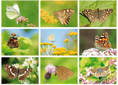 Vlinder ansichtkaarten set