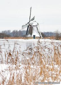 ansichtkaart Ypey molen - Ryptsjerksterpolder